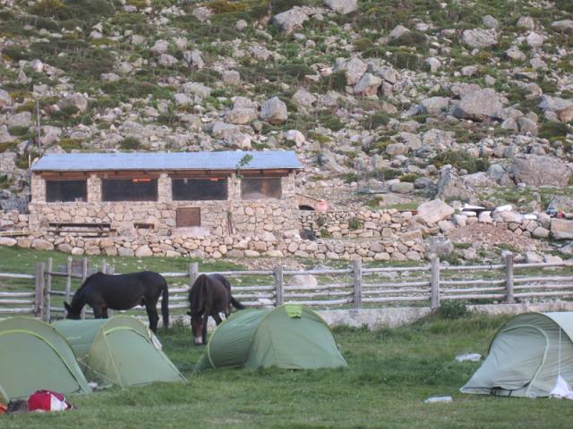 Refuge de l'Onda - Quelqu'un a oublié de fermer l'enclos, les mules en profitent
