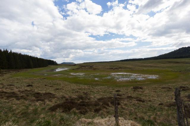 Lac Estivadoux et sa tourbière en formation - Montcineyre ?